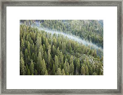 Smoke In Forest Framed Print by Rick Pham