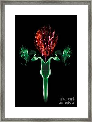 Smoke Thistle Framed Print