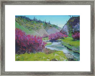 Smoke Trees By The Creek Framed Print by Dan Scannell