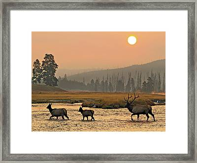 Smokey Elk Crossing Framed Print