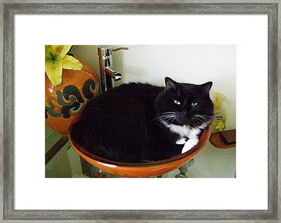 Smokey In Wash Bowl Framed Print by Jeanette Oberholtzer