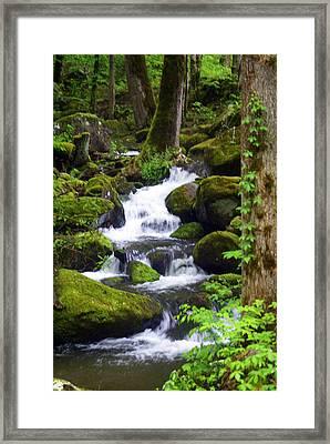 Smokey Mountain Stream Framed Print by Marty Koch