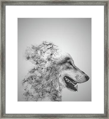 Smokey Wolf Framed Print