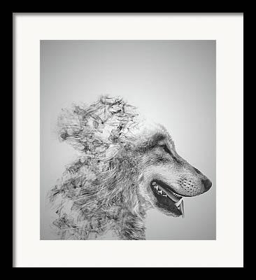 Wolf Face Framed Prints