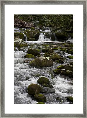 Smokies In The Spring Framed Print