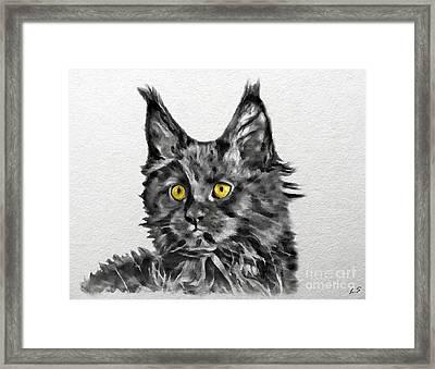 Smoky Black Kitten Maine Coon Framed Print by Sergey Lukashin