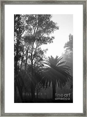 Smoky Morning Trees Framed Print