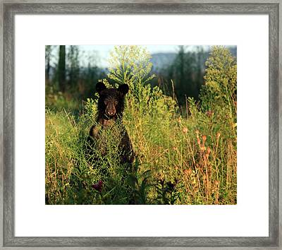 Framed Print featuring the photograph Smoky Mountain Staredown by Doug McPherson