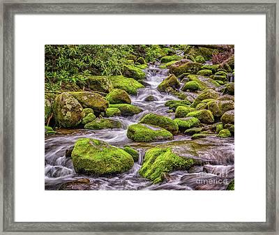 Smoky Mountain Stream Framed Print by Nick Zelinsky