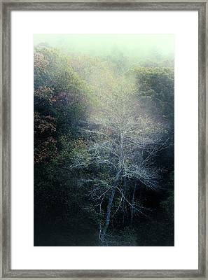 Smoky Mountain Trees Framed Print