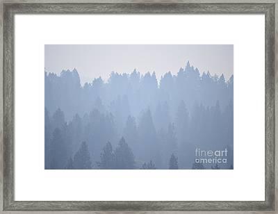 Smoky Pines Framed Print