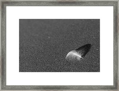 Framed Print featuring the photograph Smooth As A Feather by Lora Lee Chapman