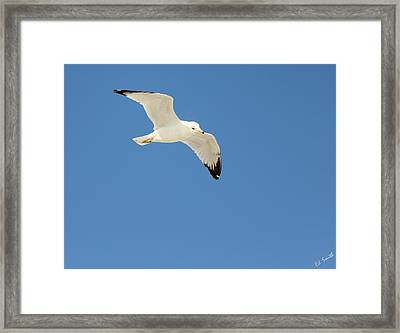 Smooth As Silk Framed Print by Ed Smith