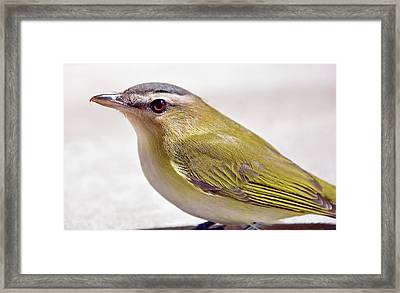 Framed Print featuring the photograph Smooth by Glenn Gordon