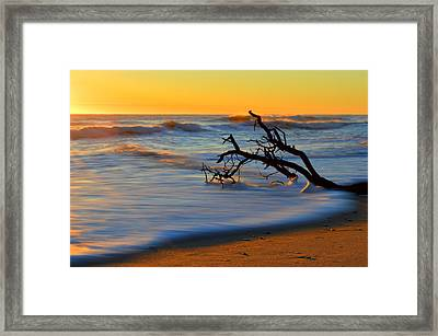 Smooth Move Framed Print
