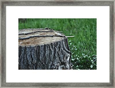 S'more Sticks Framed Print