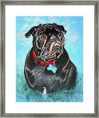 Smug Black Pug Framed Print
