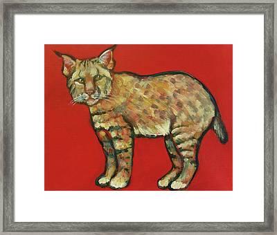 Smug Bobcat Framed Print by Carol Suzanne Niebuhr