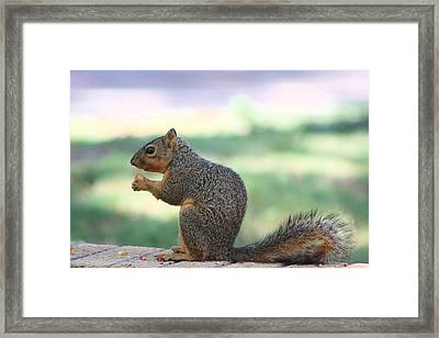 Snack Time Framed Print by Colleen Cornelius