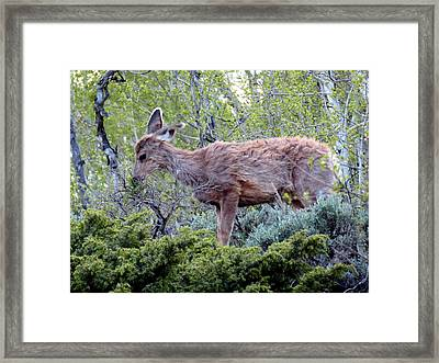 Framed Print featuring the photograph Snack Time by Karen Shackles