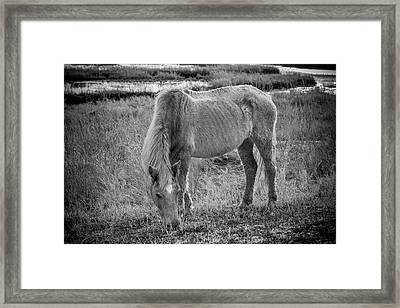 Snacking Framed Print by Kristopher Schoenleber