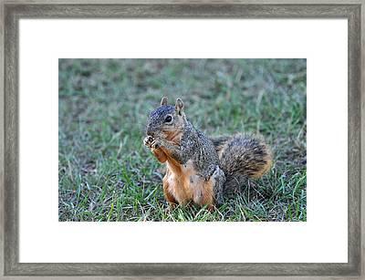 Snacking Framed Print by Teresa Blanton