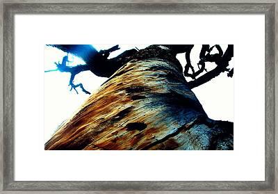 Snag Framed Print