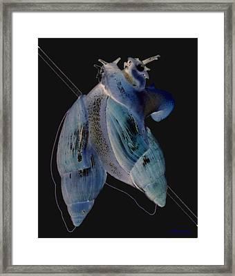 Snail Hugs Framed Print by Debbie May