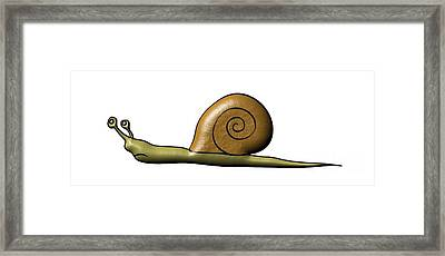Snail Framed Print by Michal Boubin
