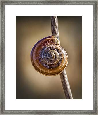 Snail On A Stick Framed Print by Kelley King