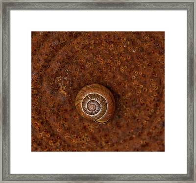 Snail On A Tin Can Framed Print