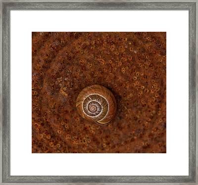 Snail On A Tin Can Framed Print