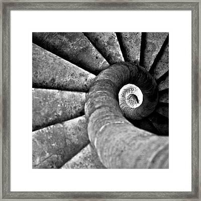 Snail Framed Print by Photography Tony Garcia