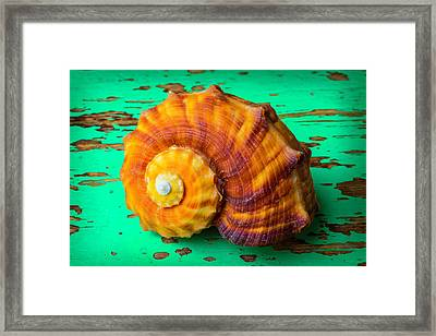 Snail Sea Shell On Green Board Framed Print by Garry Gay