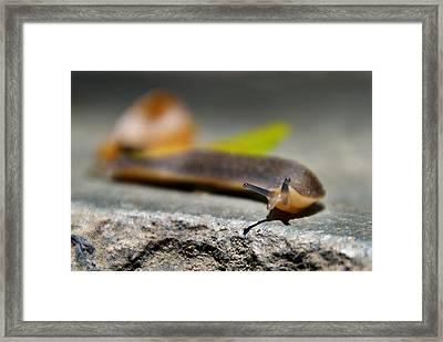 Snail Searching For Shell Framed Print