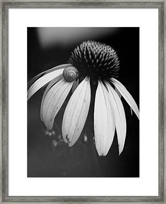 Framed Print featuring the photograph Snail by Sharon Jones