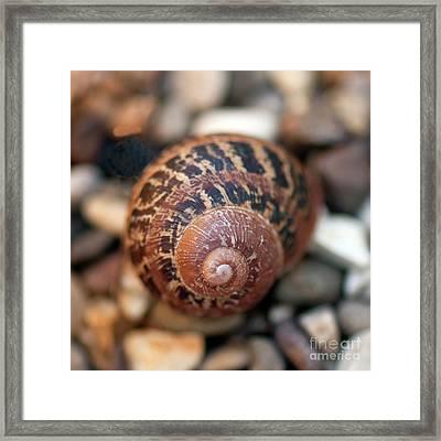 Snail Shell Framed Print