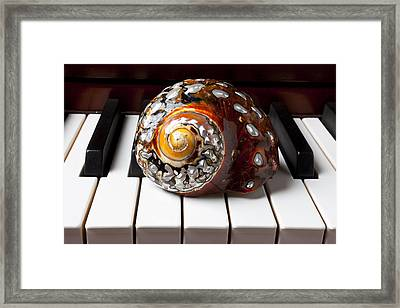 Snail Shell On Keys Framed Print by Garry Gay