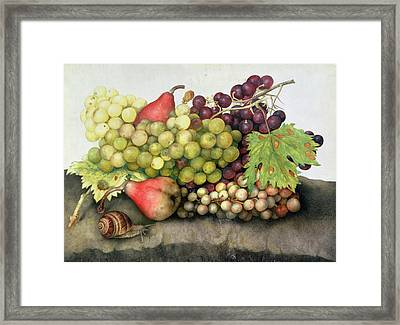 Snail With Grapes And Pears Framed Print by Giovanna Garzoni