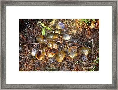 Snails Of An Ibis Framed Print