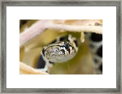 Snake Framed Print by Andre Goncalves
