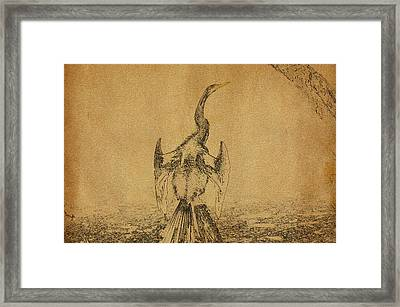 Snake Bird Or Darter  Framed Print