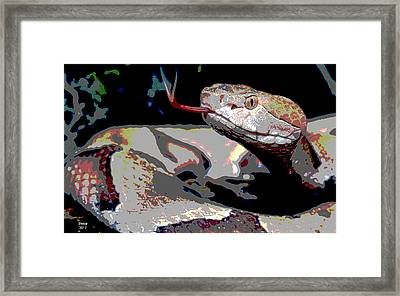 Snake Framed Print by Charles Shoup