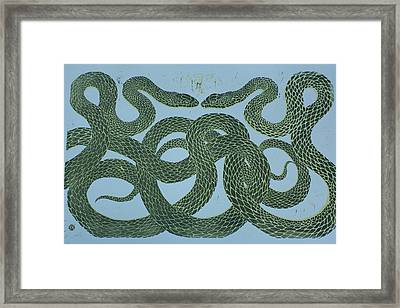 Snake Council Framed Print by Pati Hays