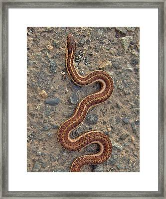 Snake Crossing Framed Print by Shannon Gresham