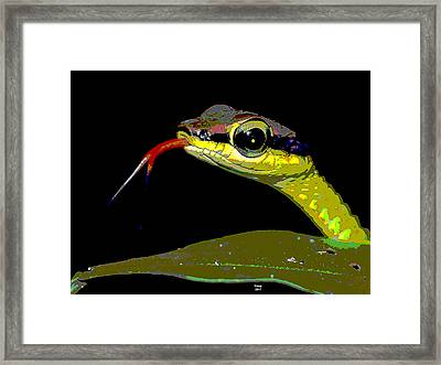 Snake Eyes Framed Print by Charles Shoup