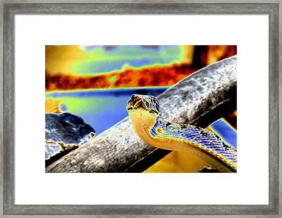 Snake Eyes Framed Print by Peter  McIntosh
