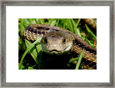 Snake Face Framed Print