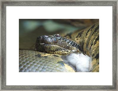 Framed Print featuring the photograph Snake by Heidi Poulin