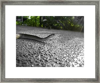 Snake In The Sun Framed Print